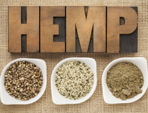 Hemp Protein: The Best Plant-Based Protein Powder?